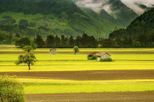 SGGW W WARSZAWIE Rolniczy Zakład Doświadczalny w Żelaznej